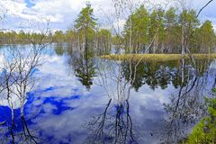 Flood in the taiga of Western Siberia Royalty Free Stock Images