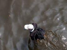 FLOOD THAILAND 2011. Man walk through the flood in Bangkok, Thailand Stock Photography