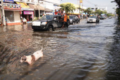 Flood in Thailand Royalty Free Stock Images