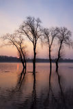 Flood tide trees Stock Photography