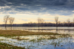 Flood. Trees in water during spring flood Stock Photo