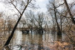 Flood, trees in water, wooden roof of Christian gazebo sticks out of the river. Spring time Royalty Free Stock Photo