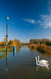 Flood in UK, river Thames in Reading Stock Photos