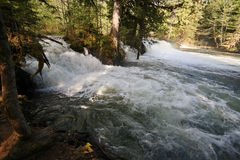 Flood Waters. Forrest spring during the spring floods Stock Photography
