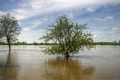 Flood at Wisla river. Alarm level of water on river Royalty Free Stock Photography