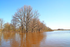 Flood in wood Stock Photo
