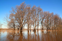 Flood in wood Royalty Free Stock Images