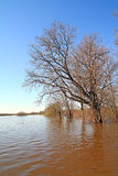 Flood in wood Royalty Free Stock Photos