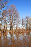 Flood in wood Royalty Free Stock Image