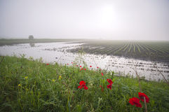 Flooded agricultural land Royalty Free Stock Photo