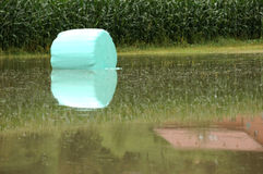 Flooded agriculture Royalty Free Stock Photos