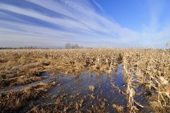 Flooded agriculture field Royalty Free Stock Image