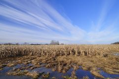 Flooded agriculture field Stock Image