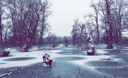 Flooded area around the river in winter time Stock Images