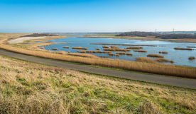 Flooded area with some clumps of yellowed grass Royalty Free Stock Photo