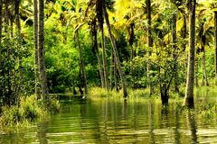 FLOODED BACKWATERS Stock Images
