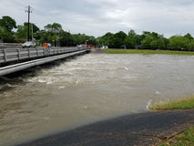 Flooded Bayou Stock Photography