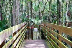 A flooded boardwalk in Lettuce Lake Park,. A flooded boardwalk in the Lettuce Lake Park, Tampa, Florida At the north edge of Tampa, Lettuce Lake Park protects stock photo