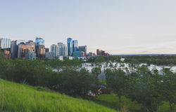 Flooded Calgary. The Bow River floods Prince's Island Park during Calgary's 2013 flood Royalty Free Stock Photo