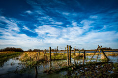 Flooded cattle pen Royalty Free Stock Photo