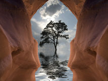 Flooded Cavern and tree. Flooded Symmetrical Cavern and Tree stock photo
