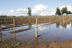 Flooded Crops After the Rains Stock Photo