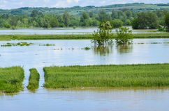 Flooded cultivated land, damage from water Royalty Free Stock Photo