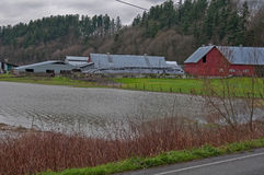 Flooded Dairy Farm. STANWOOD, WA – DECEMBER 14: - Flood waters from Stillaguamish river over dairy farms caused farmers hardship. The natural disaster took stock photos