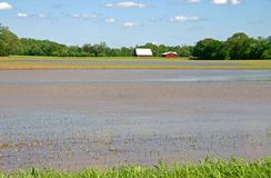 Flooded Farm Stock Images