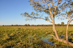 Flooded farm, Mato Grosso do Sul (Brazil) Royalty Free Stock Photo