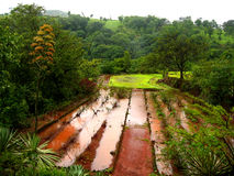 Flooded farm in monsoon season Stock Photo