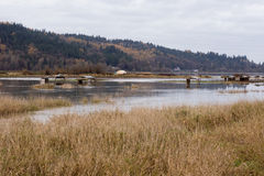 Flooded farmlands Royalty Free Stock Images