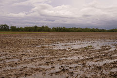 Flooded Field Stock Images