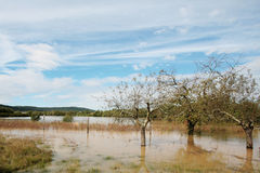 Flooded field. In Slovenia, Europe Royalty Free Stock Photography