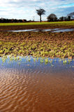 Flooded field Royalty Free Stock Photos