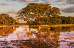Flooded field Stock Image