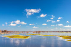 Flooded field in front of the Dutch river IJssel Royalty Free Stock Photos