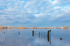Flooded field in front of the Dutch river IJssel Stock Photo