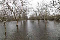 Flooded Field near Sacramento, California. CHICO, CALIFORNIA - FEBRUARY 20: An atmospheric river extreme weather event causes the Sacramento River to flood royalty free stock photo