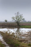 Flooded field Royalty Free Stock Images