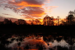 Flooded field at sunrise A Stock Photo