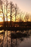 Flooded field at sunrise B Royalty Free Stock Photography