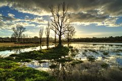 Flooded field at sunset, with trees reflected in the water puddles stock photos