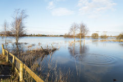 A flooded field. Royalty Free Stock Photos