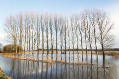 A flooded field. Royalty Free Stock Images