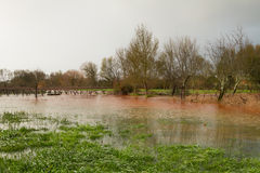 Flooded Fields Royalty Free Stock Photo