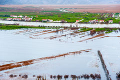 The flooded fields and crops Royalty Free Stock Photo