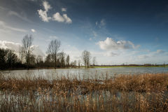 Flooded fields Stock Photography
