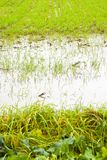 Flooded fields after torrential rain royalty free stock photography