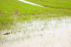 Flooded fields after torrential rain Royalty Free Stock Images